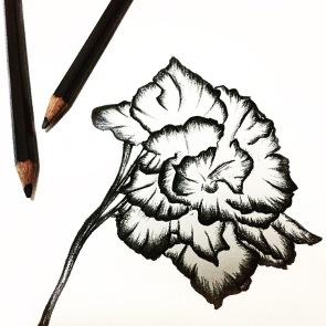 Flower Sketch 1