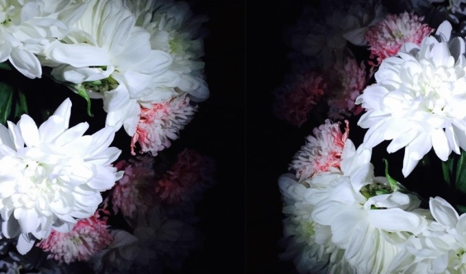 Flowers In The Dark – DIY Photography